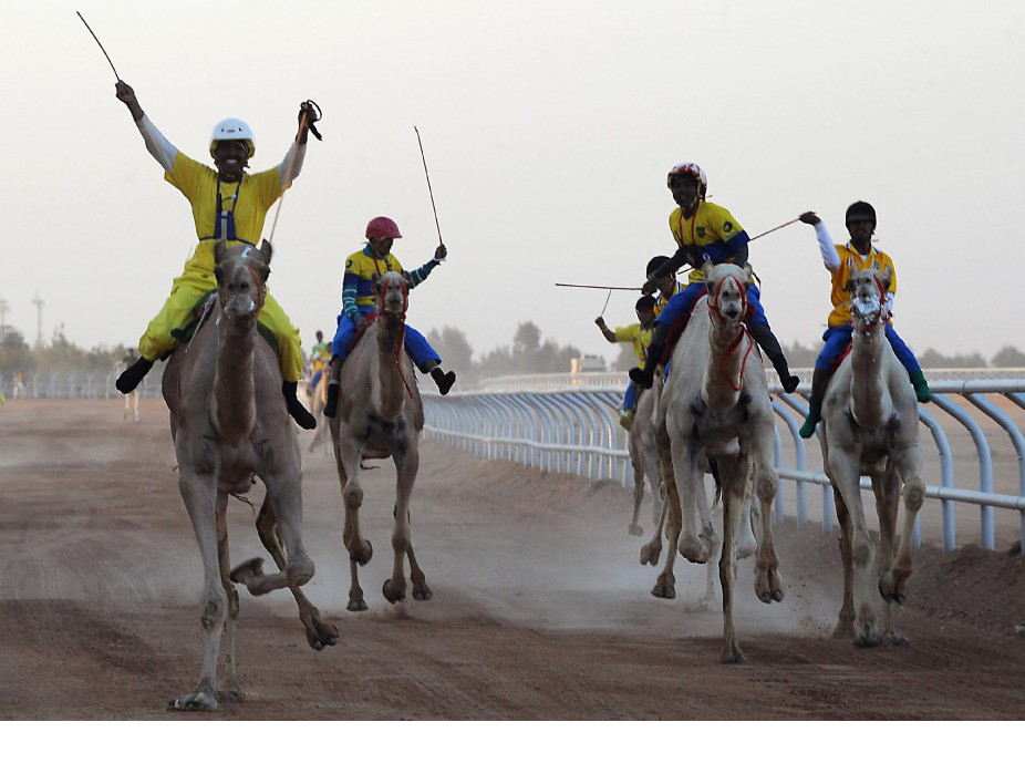 A Dzsanadrija fénypontja egyébként állítólag a tevefutam, ám erről sajnos ottjártunkkor már lekéstünk Fotó: Fayez Nureldine / AFP